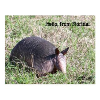 Hallo, von Florida! Postkarte