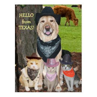 Hallo von Texas! Postkarte