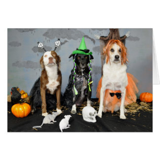 Halloween-Grußkarte. Foto, 3 Hunde im Widerstand Karte