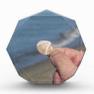 Halten eines Seashell in der Hand Auszeichnung