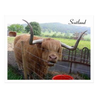 Hamish das haarige Gurren, Schottland Postkarten