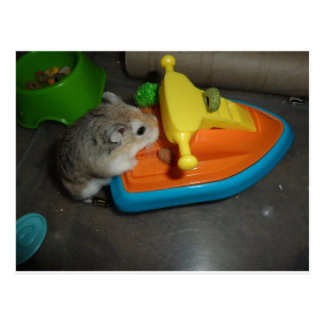 Hamster auf einem Jet-Ski Postkarte