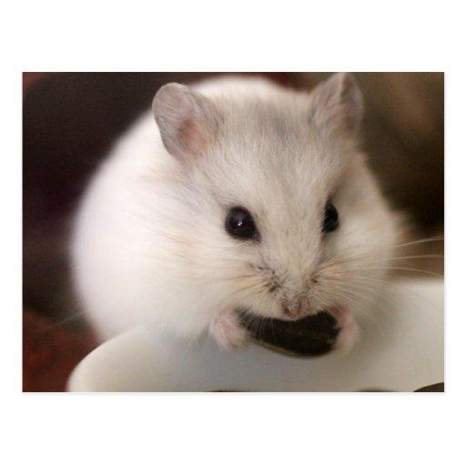 Hamster-Postkarte