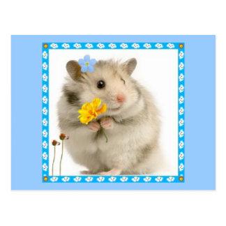Hamster Postkarte