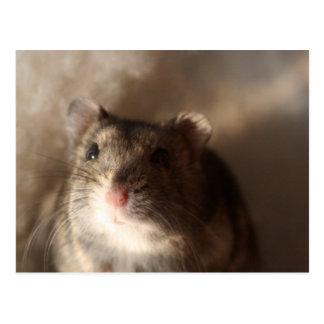 Hamster-Postkarte Postkarte