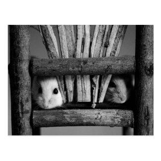 Hamster-Postkarte Postkarten