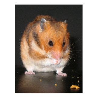 Hamster-Postkarten Postkarte