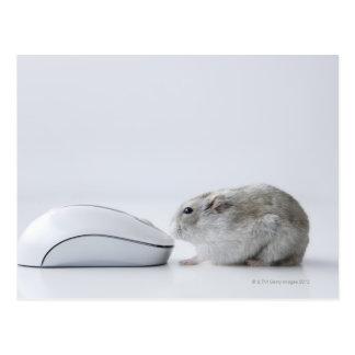 Hamster- und Computermaus Postkarte
