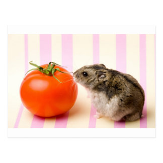 Hamster und Tomate Postkarte