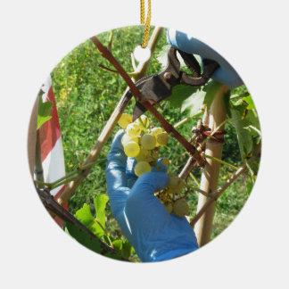 Hand, die weiße Trauben, Erntezeit schneidet Keramik Ornament