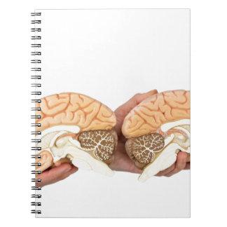 Hände, die vorbildliches menschliches Gehirn auf Spiral Notizblock