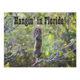 Hangin in Florida Postkarte