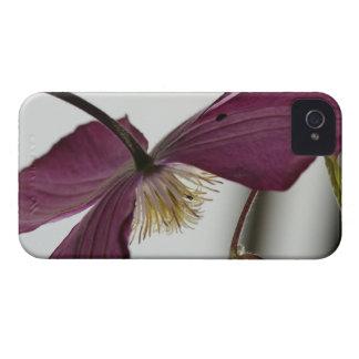 Hanycase Krea-Clematis iPhone 4 Hüllen