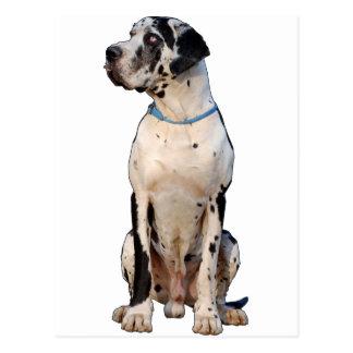 Harlekin Deutsche Dogge Postkarte
