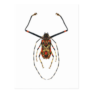 Harlekin-Käfer Postkarte
