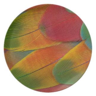 Harlekinmacaw-Papageienfedern Teller
