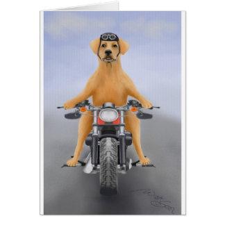 Harley, der Labrador reitet Karte