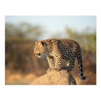 Harnas Naturschutzgebiet, Namibia Postkarte