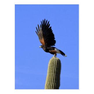 Harriss Falke, der Flug nimmt Postkarte