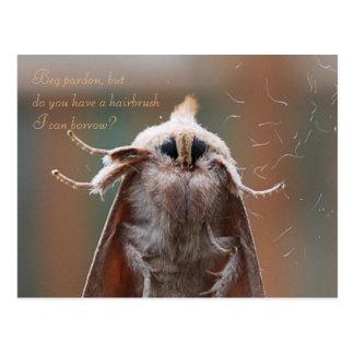 Harry die haarige Motten-Postkarte Postkarte