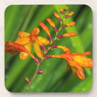 Harte PlastikUntersetzer der nassen orange Blume Getränkeuntersetzer