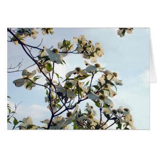 Hartriegel-Blüte Karte
