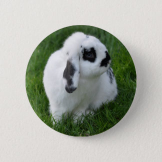 Hase - Button