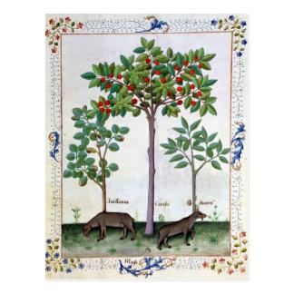 Haselnuss Bush und Kirschbaum Postkarte