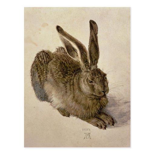Hasen, 1502 postkarten