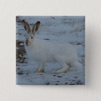 Hasen des Snowshoe-R0023 Quadratischer Button 5,1 Cm