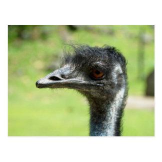 Haupt` schoss von Emus auf Zoo von Auckland Postkarte