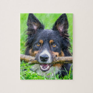 HauptBorder-Collie mit Stock in beak.JPG Puzzle
