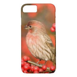 Haus-Fink auf gemeinem Winterberry iPhone 8/7 Hülle