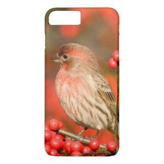 Haus-Fink auf gemeinem Winterberry iPhone 8 Plus/7 Plus Hülle
