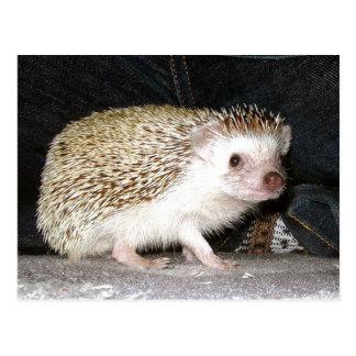 Haustier-Igel Postkarten