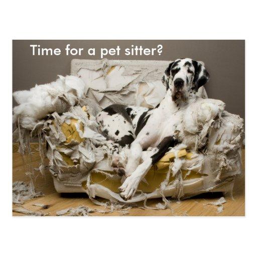 Haustier-Modell-Deutsche Dogge auf gekauter Postkarten