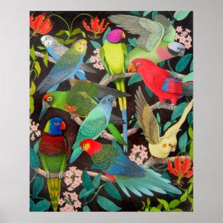 Haustier-Papageien des Plakats der Weltii Posterdruck