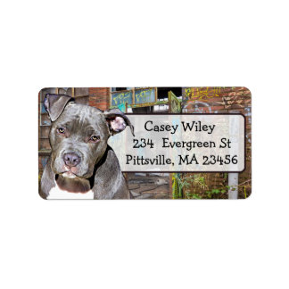Haustier Pitbull HundeGraffitihintergrund Adressaufkleber