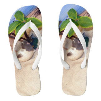 Haustier-Ratten-Herr Bean am Strand drehen Flip Flops