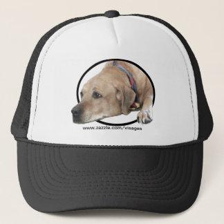 Haustier Rhodesian Ridgeback Hundebild Truckerkappe