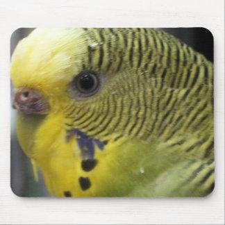 Haustier-Vogel-Nahaufnahme Mousepad
