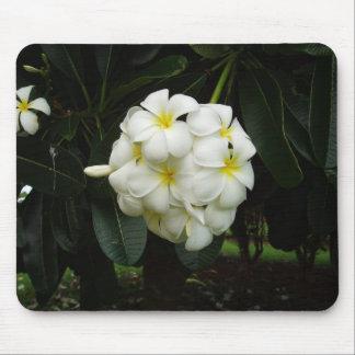 Hawaii-Blume Mauspad