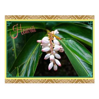 Hawaii-Blumen-Postkarte Postkarte