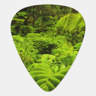 Hawaii, große Insel, üppiges tropisches Grün Plektrum