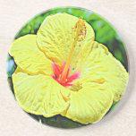 Hawaii-Hibiskus