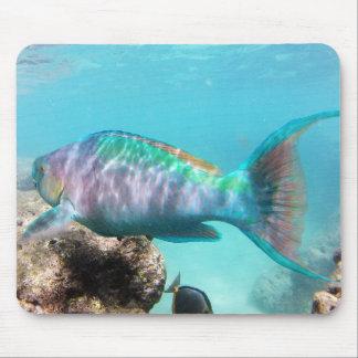 Hawaii-Papageien-Fische Mauspads