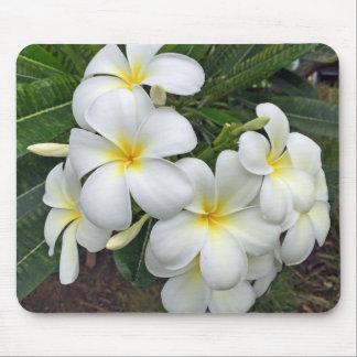 Hawaiiplumeria-Blumen Mousepad
