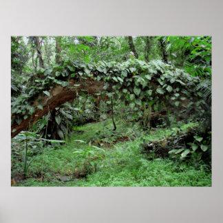 Hawaiische Dschungel-Reben Plakatdrucke