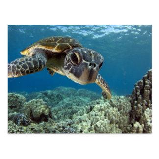 Hawaiische grüne Meeresschildkröte Postkarte