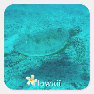 Hawaiische grüne Meeresschildkröte Quadratischer Aufkleber